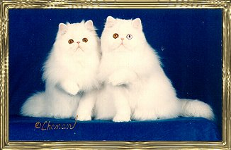 Photo of Two White Kittens