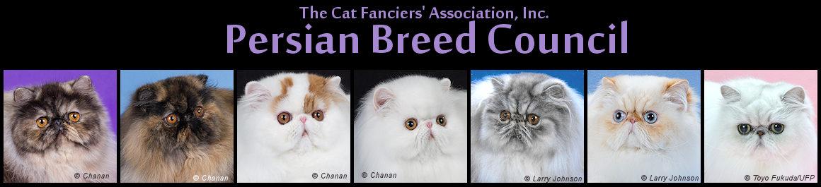 Persian cat clean eyes